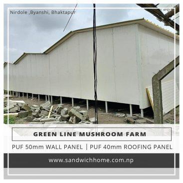 green line mushroom farm in Bhaktapur, Nepal